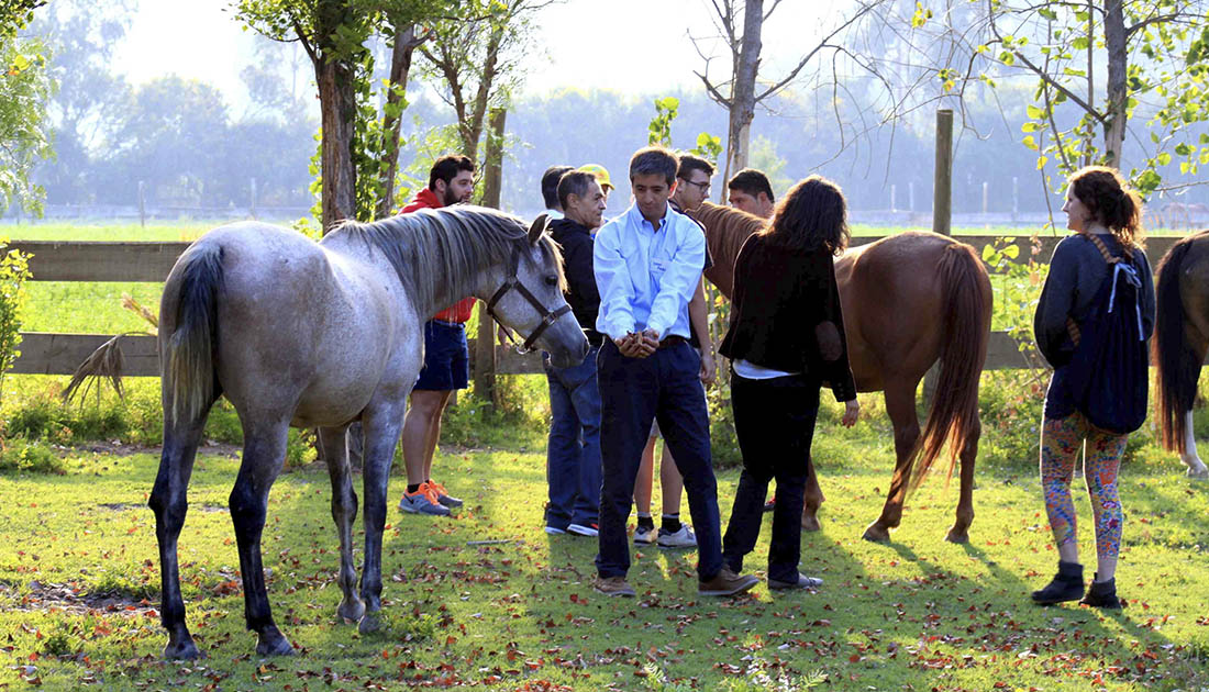 COACHING PERSONAL Y PROFESIONAL CON CABALLOS