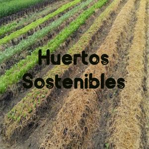 huertos sostenibles-rsc